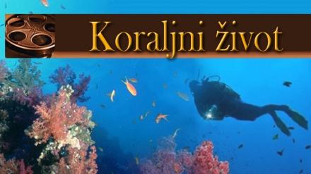 Koraljni život(08. dio)