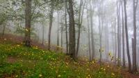 Ljepote Irana; šume Hirkani