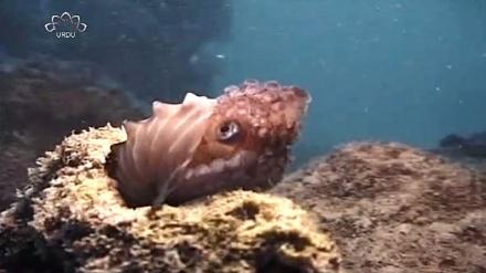 ڈاکومینٹری - خلیج فارس اور دریائے عمان کی آبی مخلوقات