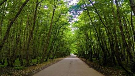 تێکەڵاویی دەریاو دارستان لە سەیرانگەی «گیسوم»ی گێڵان