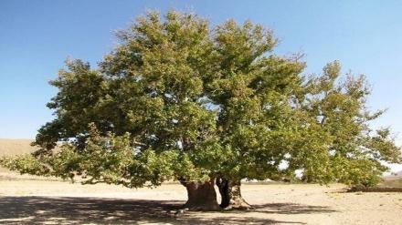 تۆمارکرانی هەشت داری کۆنی کوردستان وەکوو میراتی نیشتیمانیی ئێران