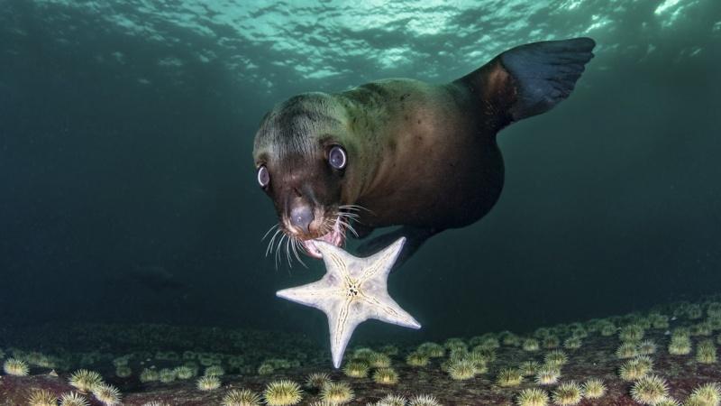 Odabrane fotografije s takmičenja u umjetničkoj fotografiji oceana 2020.