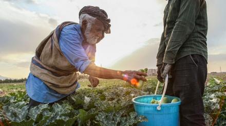 اسی سالہ کسان کی روزہ داری۔ تصاویر
