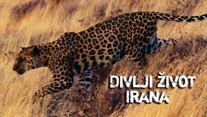 Divlji život Irana