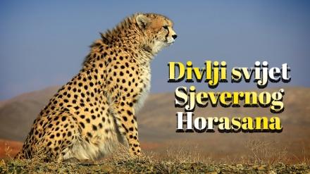 Divlji svijet Sjevernog Horasana
