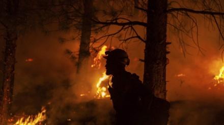 Sirijske vlasti pogubile 24 osobe osuđene za podmetanje šumskih požara